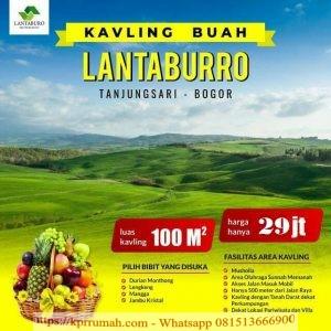 Investasi Tanah Produktif di Kebun Buah Lantaburro
