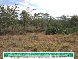 Investasi Tanah Produktif di Kebun Buah Lantaburro Tanjungsari Bogor