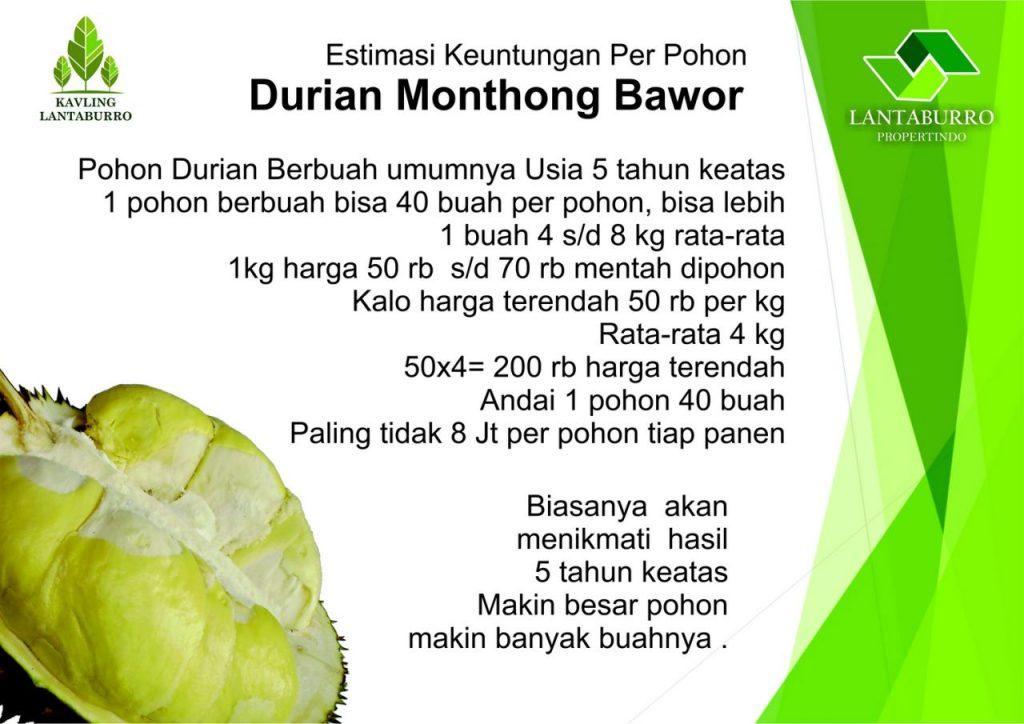 Profit Pohon Durian