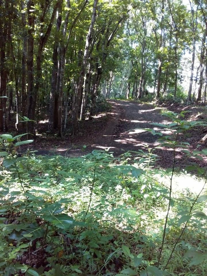 Jual Tanah Kebun Bogor